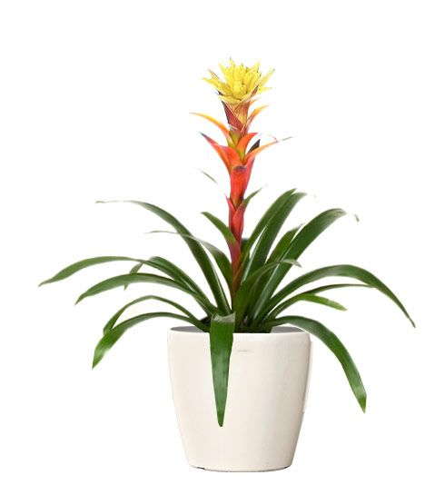 Best 25+ Buy indoor plants online ideas on Pinterest | Growing ...