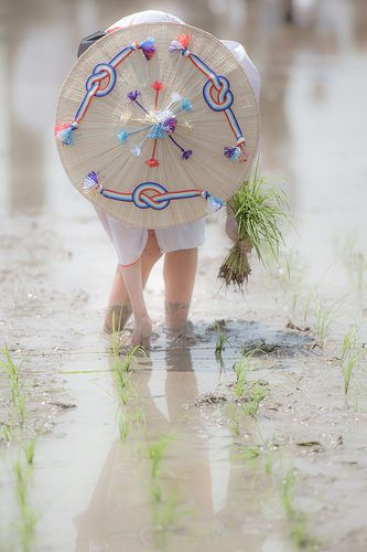 Japanese folk festival of rice planting in Mie, Japan