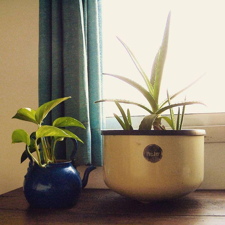 Los portamacetas son prácticos para intercambiar plantas sin necesidad de trasplantarlas. El Aloe Vera es una suculenta famosa por sus cualidades medicinales además de ser muy decorativa y de fácil cuidado.  #diseño #industrial #diseñoindustrial #industrialdesign #industriaargentina #decoracion #deco #color #pastel #pfeffer #maceta #plantas #aloevera #botanical #reuso #reciclaje #recycle #reused