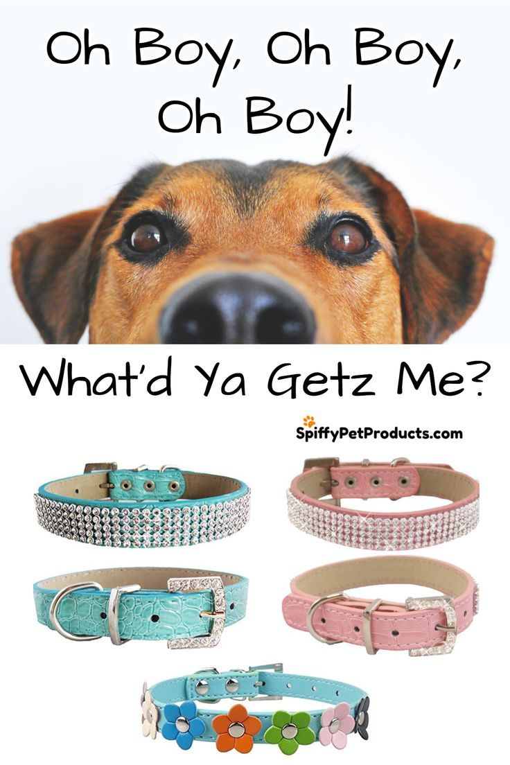 Leather Dog Collars With Bling Leather Dog Collars Dog Supplies Dog Accessories