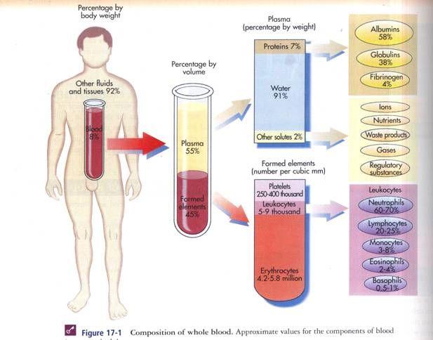 Definition of Serum - MedicineNet