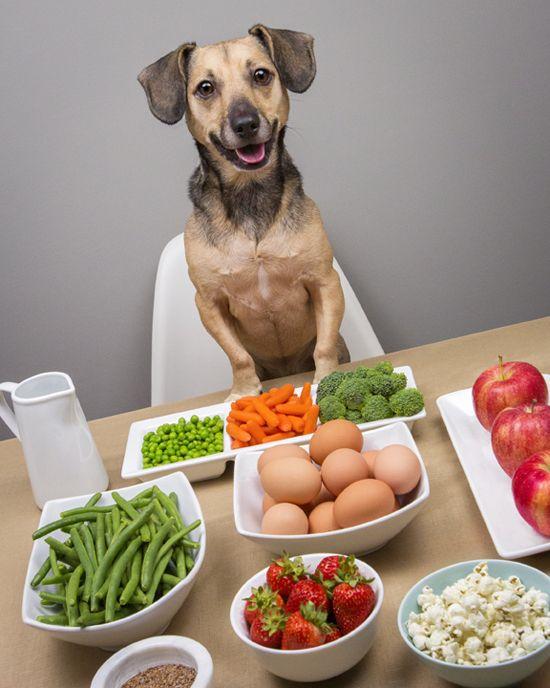 Щадящая диета для собаки