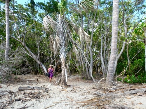 Mysterious mangrove forest at Barra de Navidad #Mexico