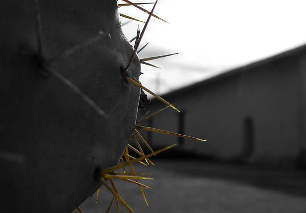 Here is an image I took inside a mission centre in a town called Sonoma. Roughly one and half hours north of San Francisco. I wanted to get a close detailed shot of the cactus with the background environment out of focus.