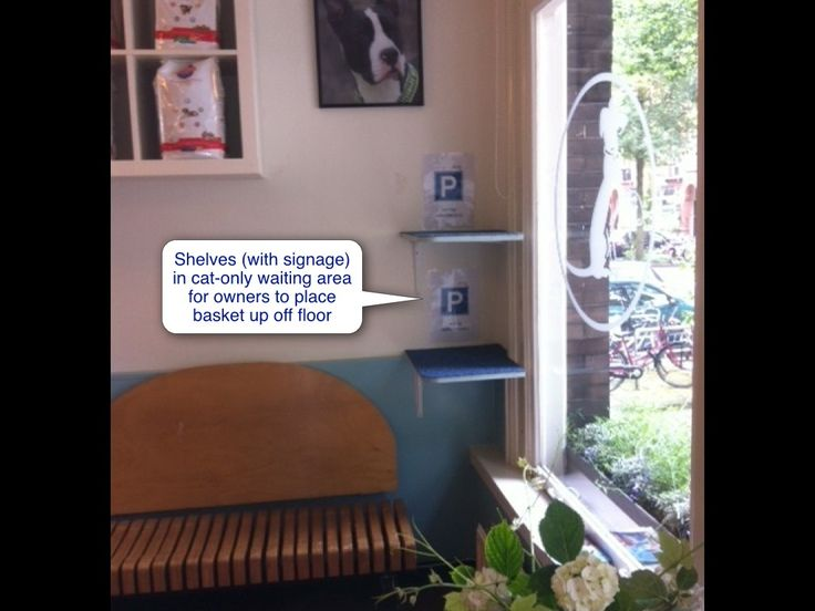 Cat Friendly Clinic: Waiting room or reception area | International Cat Care