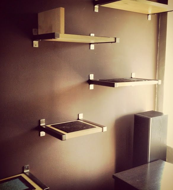 wall shelves for cat hangouts