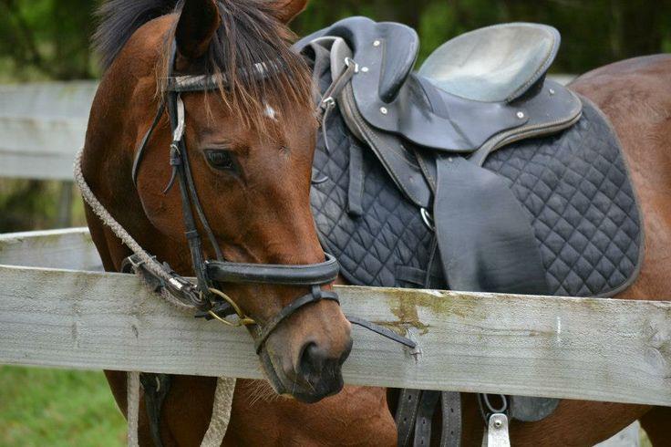 Equine Trader Vetpro Photo of the Week entrant - Kristy Reiche