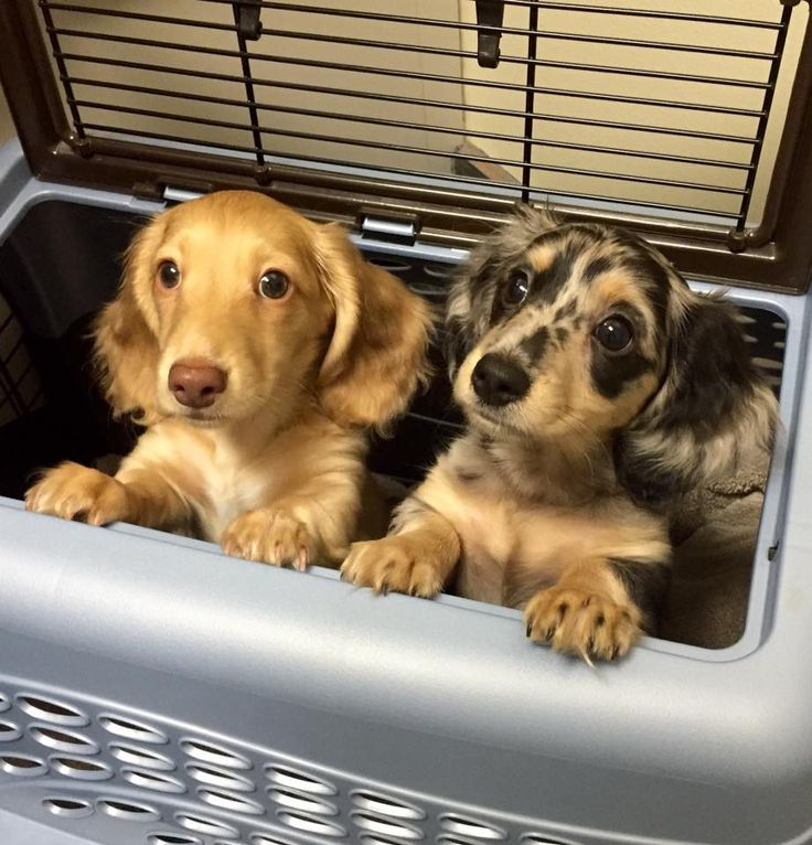 First visit to the vet! (Source: http://ift.tt/1psRcnK)