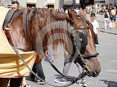Florence cathedral also named Basilica Santa Maria del Fiore at Duomo Square and a horse, Florence, Italy