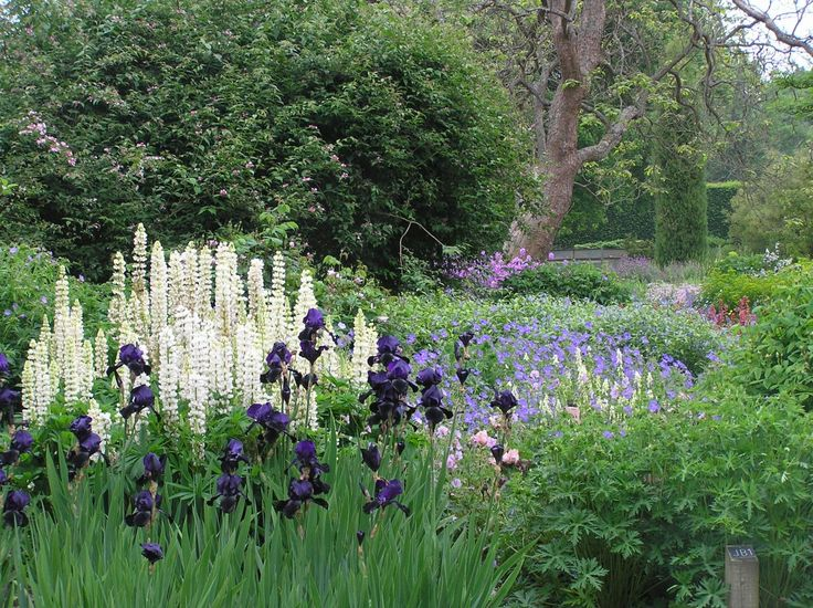 25 best ideas about herbaceous border on pinterest for Herbaceous border design examples
