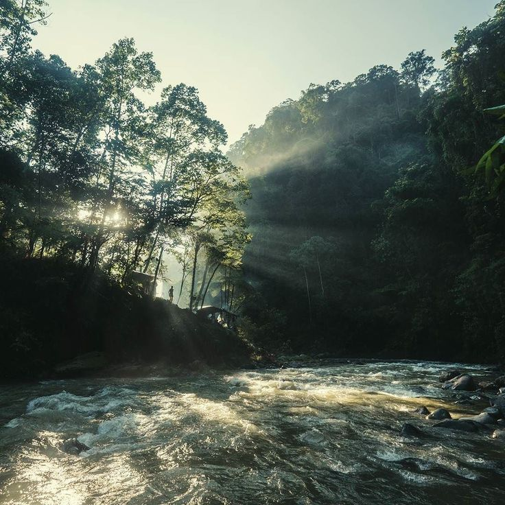 The jungle and our campsite by Bohorok river in Gunung Leuser national park waking up to a new morning.  #bukitlawang #indonesia #outdoors #outdoorlife #hiking #jungle #travelphotography #travel #adventure #liveoutdoors #outdooradventurephotos by toisniemi