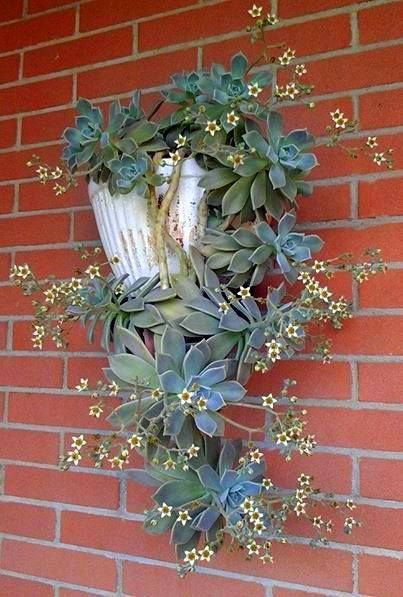 760 Best Images About Window Amp Wall Pots On Pinterest