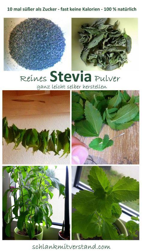 Reines Stevia Pulver ganz leicht selber herstellen  Ich habe das grüne Pulver aus einer Stevia-Pflanze, die ich mir im Frühjahr gekauft habe gewonnen. Die Pflege der Pflanze ist sehr einfach. Sie braucht eigentlich nur einen sonnigen Platz, regelmäßig Wasser und ist sonst recht anspruchslos. Bei mir stand sie das ganze Frühjahr und den Sommer über auf der Fensterbank oder auf der Terrasse.  Den ganzen Sommer über, ca. alle 3-4 Wochen konnte ich die Blätter ernten. Dabei habe ich jeweils die…