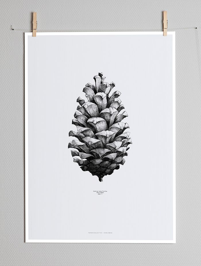Image of NATURE 1:1 PINE CONE BY FORM US WITH LOVE GREY (04001)