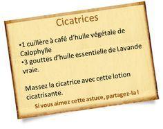 Pommade cicatrisante : Des recettes naturelles aux huiles essentielles