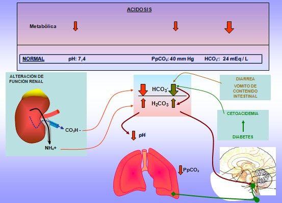 ACIDOSIS METABOLICA La acidosis metabólica es uno de los trastornos del equilibrio ácido-base, caracterizado por un incremento en la acidez del plasma sanguíneo y es, por lo general, una manifestación de trastornos metabólicos en el organismo.