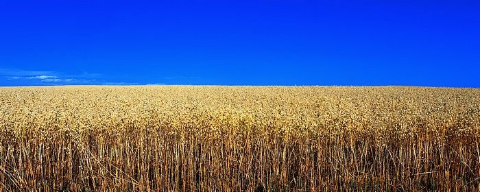 field of wheatNieuw Website, Farms Wife, Favorite Places, Blue Sky, Open Fields, Pretty Sight, Panoramic Photography