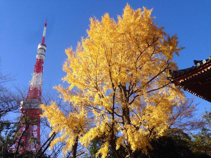 東京タワー秋色。