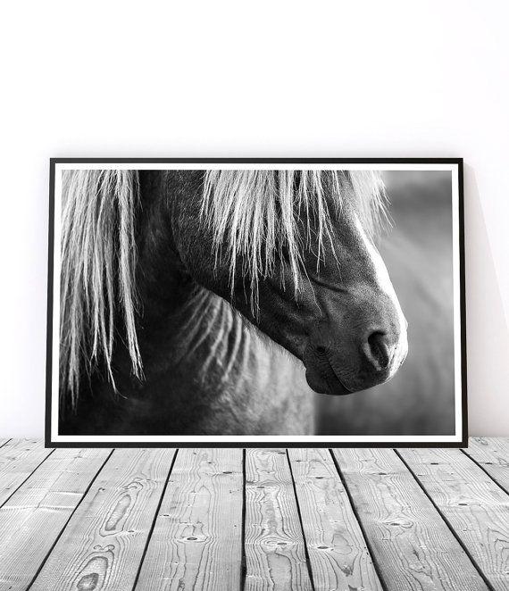 Rabid Horse Artwork Home Facebook - 570×662