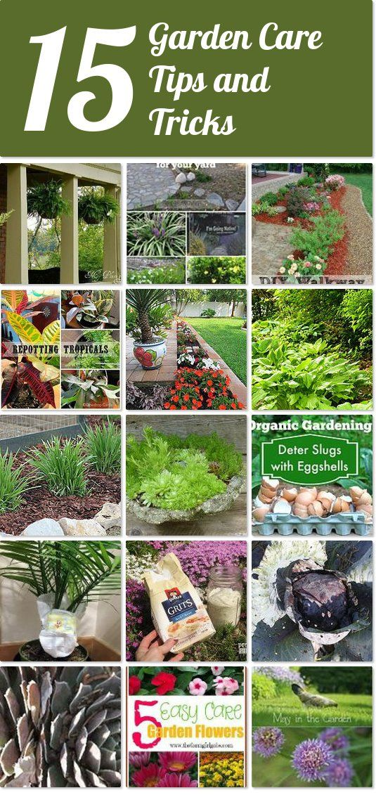 15 garden care tips and tricks | Hometalk