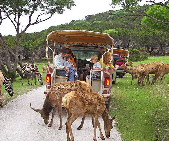 Go on a safari without leaving the country! Animal-loving kids will go wild for these adventurously fun vacations:  http://www.parents.com/fun/vacation/vacations-for-animal-lovers/?socsrc=pmmpin130409fvAnimalVacations