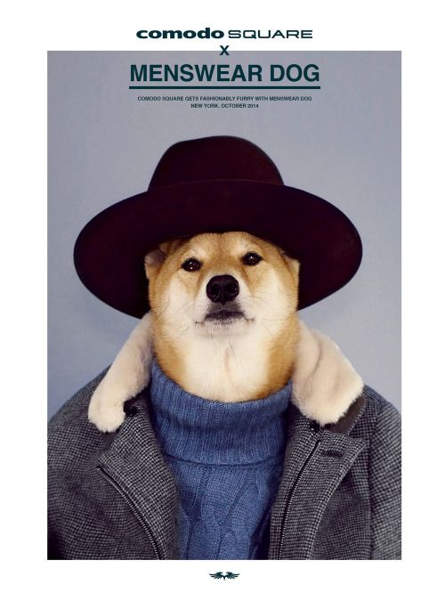 Urban Gentleman #mensweardog #menswear #dog #shiba #dapper #fashion #style #hat #turtleneck #comodosquare