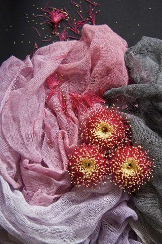bloom image - lovely colour palette