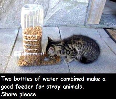 Good idea! for feral cats... Remember to put duckd tape around the edges of the feeding hole, or burn/heat them, so they do not cause damage