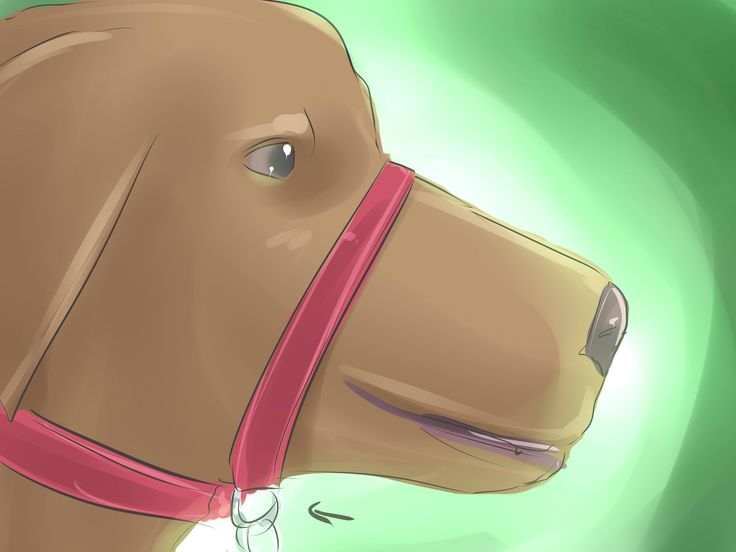How to Put a Gentle Leader on a Dog