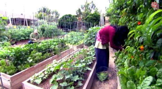 Небольшая органическая ферма на 4 сотках