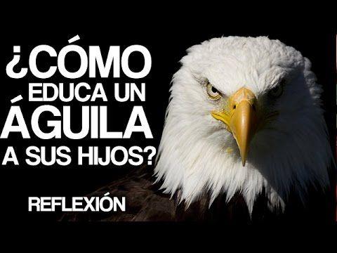 Historias para Reflexionar - El consejo del Aguila