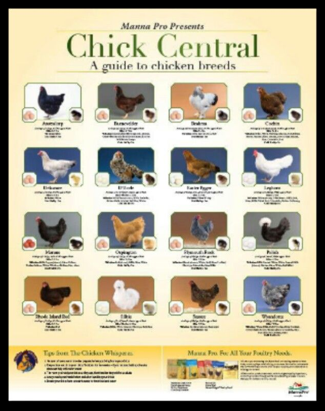 Craftsman Style Home Decorating Ideas: Chick Identification Chart