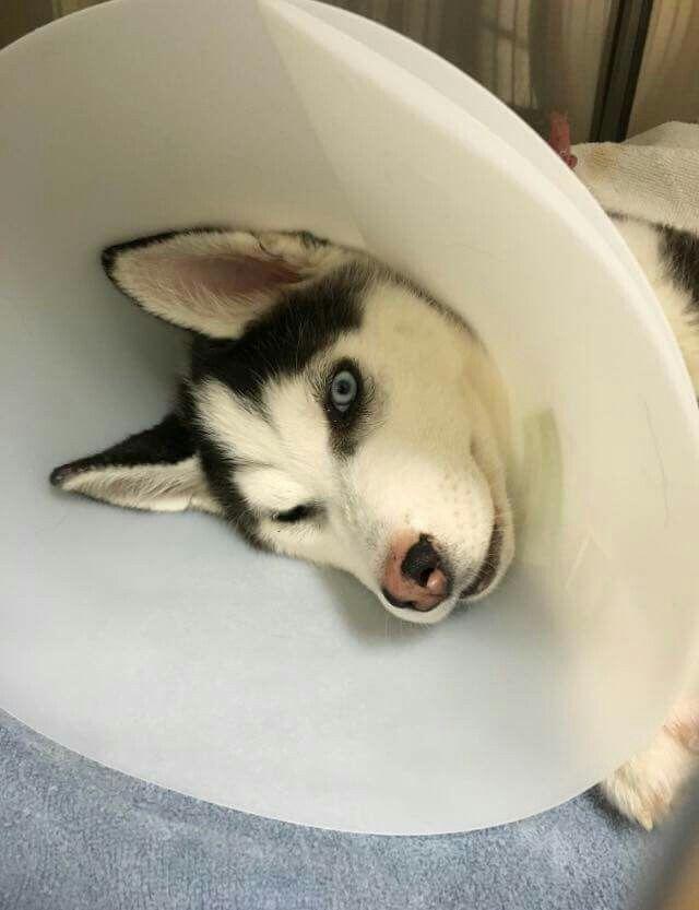 Cool Cuby Chubby Adorable Dog - e1f36f51abf1d06766b91858b0068fd9--animals  2018_74276  .jpg