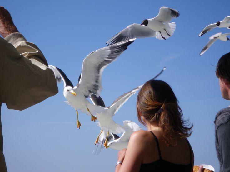 Möwen begleiten die Fährüberfahrt zwischen dem Festland und den Ostfriesischen Inseln.