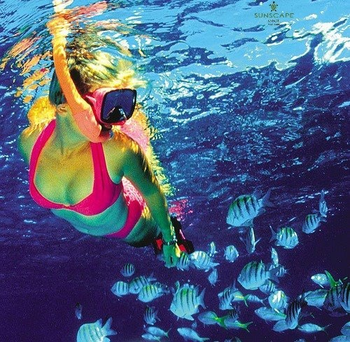 Snorkeling in curacao bucketlist sunscaperesorts - Cozumel dive packages ...