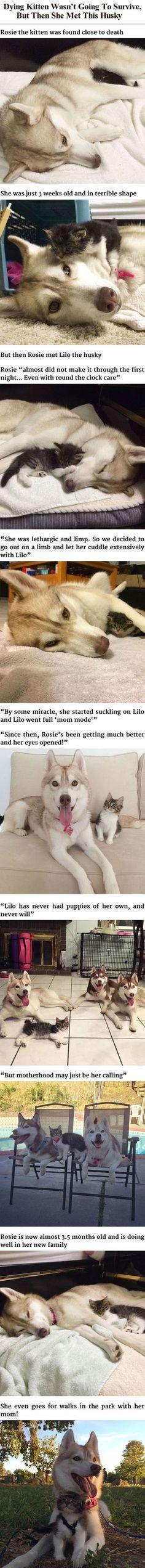 Ungewöhnliche Tierfreundschaften..........Katze und Hund