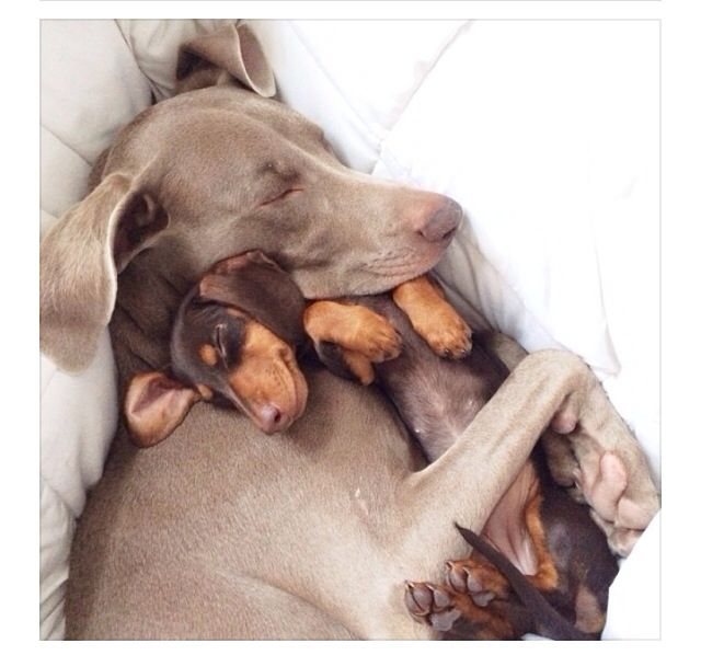 Awwww. ...you know what it is about dogs... ...unconditional love & loyalty. ..... no matter what. ...I'm not saying that's the way people should be, ..but it sure is nice to have,... in any form.... ... .