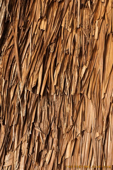 Thatched roof texture: Roof Texture, Texture Reference