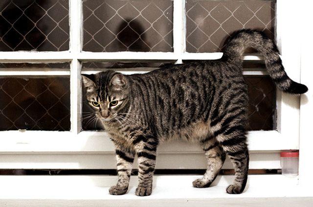 Por que seu gato faz xixi no lugar errado saiba como resolver | FELINO DOG