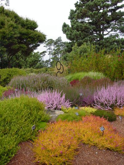 Heath and Heather Garden