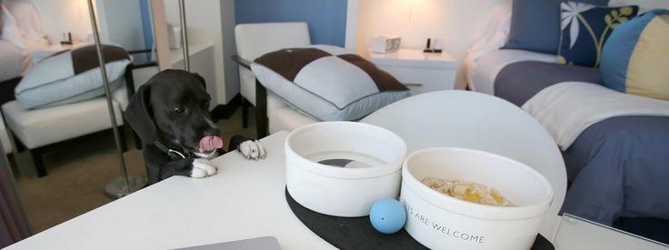 In albergo con cane e gatto  Residence, agriturismi e alberghi che accettano gli animali, forniscono una brandina in camera oppure aree con cucce e gabbie all'esterno: non è semplice trovali, ma ci sono. http://www.cosedicasa.com/in-albergo-con-cane-e-gatto-94644/