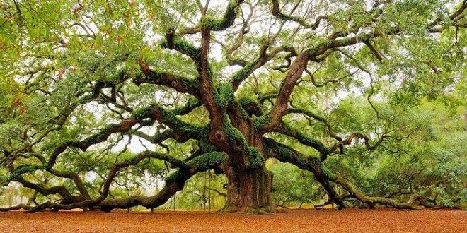 Le chêne Ange – Caroline du Sud | One360.eu
