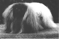 The pedigrees of stallions and dogs race Pekinois in all departments (France) registered on Chiens-de-France and atara.com.
