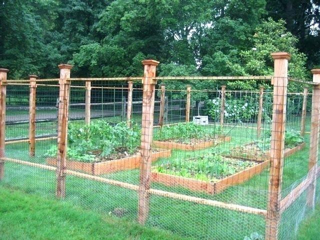 Vegetable Garden Fencing Chicken Wire Fence For Garden Chicken Wire Garden Fence Wire Garden Fencing Cheap Garden Fencing Fenced Vegetable Garden Garden Fence