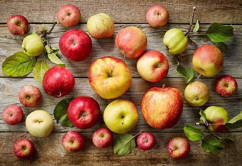 Così gli antiossidanti delle mele contrastano il tumore del colon-retto-Uno studio del Cnr e dell'Università di Salerno mostra come i polifenoli, antiossidanti di cui sono ricche le mele, possono agire contro le cellule dei tumori - Da anni diversi studi scientifici hanno dimostrato come e quali polifenoli antiossidanti sono in grado di interagire con le proteine delle cellule umane per bloccare o rallentare il processo di crescita dei tumori.