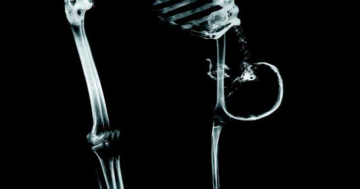 Cómo funciona el sistema esquelético con otros sistemas del cuerpo. Para ayudar a que el cuerpo se mueva libremente, el sistema esquelético trabaja cerca con el sistema muscular, el cual contiene todos los músculos del cuerpo. Cada músculo individual en el cuerpo está conectado con una o más partes del sistema esquelético. Por ejemplo, el músculo bíceps braquial está conectado con el antebrazo, y el hueso del ...