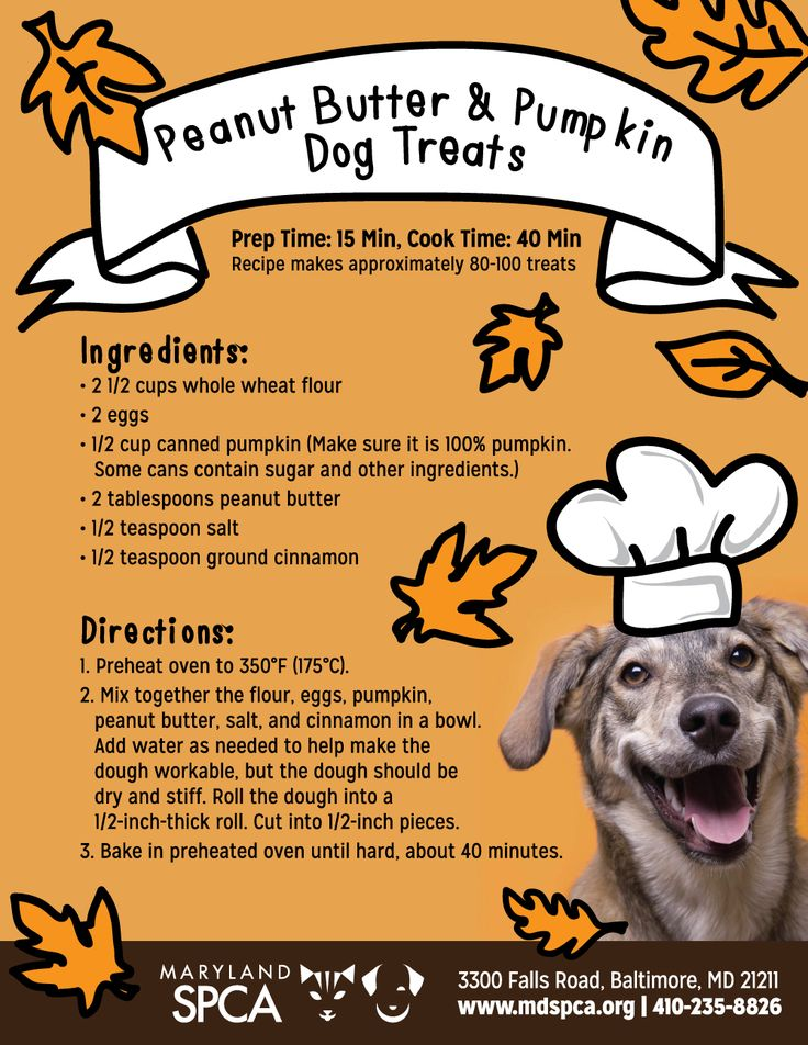Bake Your Own Peanut Butter & Pumpkin Dog Treats! - Maryland SPCA // for the in-laws' pups at Christmastime