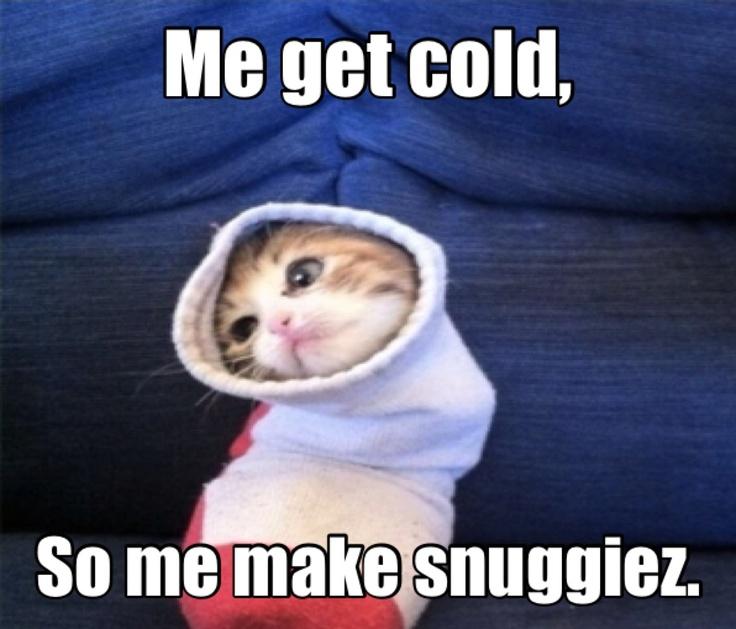 Awesome Meme: I Got Ahold Of A Meme Creator App...