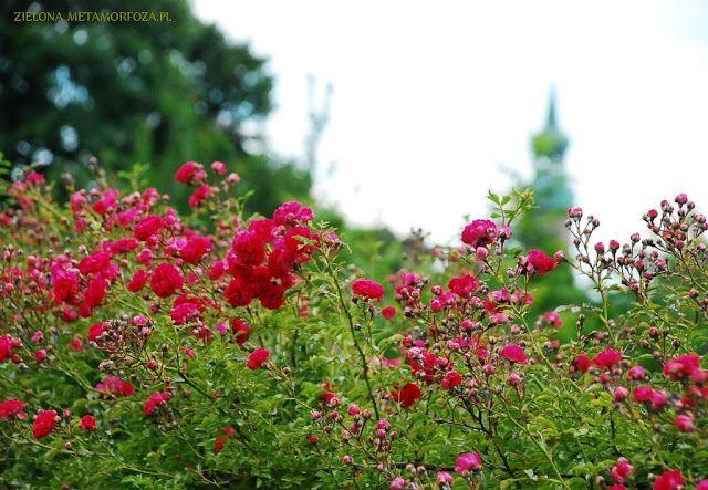 3 Ogrody Otwarte 2016, Giebułtów, zielonametamorfoza.pl, ogrody wiejskie