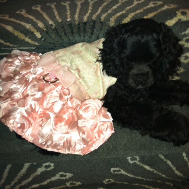 Blanche is ready for a night out in her Baxter Bailey & Co couture gown